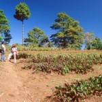 Biologischer Gartenbau, Finca Mescalito