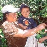 Bernardina mit Enkel bei der Kaffeeernte